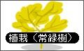 植栽(常緑樹).bmp