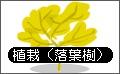 植栽(落葉樹).bmp